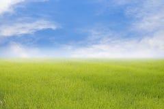 O fundo e o arroz da mola ou da natureza do verão colocam o fundo Imagens de Stock