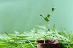 o fundo Eco-amigável do jardim da mola é azulado-verde na cor Imagens de Stock Royalty Free