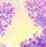 O fundo floral abstrato da mola floresce o lilás Imagens de Stock