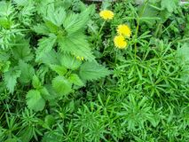 O fundo floral abstrato interessante de três plantas dividiu-se geometricamente em áreas Imagem de Stock Royalty Free
