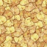 O fundo sem emenda com o vidoeiro amarelo colorido do outono sae Foto de Stock
