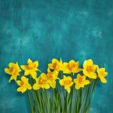 O fundo surpreendente com amarelo floresce narcisos amarelos Imagem de Stock