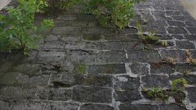 O fundo velho da parede de tijolo video estoque