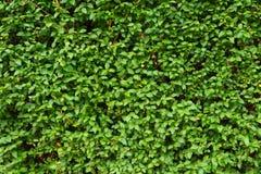 O fundo verde da folha, as hortaliças frescas colore o teste padrão Fotos de Stock Royalty Free