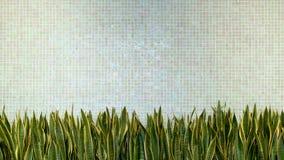 O fundo verde da textura de mosaico da porcelana da telha da parede com verde sae da planta decoração home interior do estilo aco imagens de stock