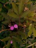 O fundo verde e a flor roxa que bonitos imagem de stock royalty free