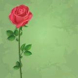 O fundo verde floral do vintage com flor aumentou Imagem de Stock