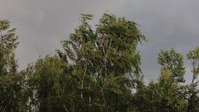 O furacão o mais forte começa Os ramos de Devereux dobram-se sob ventanias de vento fortes A mosca sae rasgado das árvores video estoque