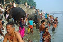 O gado o mais grande de Asiaâs justo Imagem de Stock Royalty Free