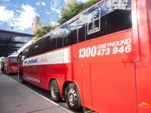 O galgo Austrália é serviço nacional do treinador de Austrália único, proporciona serviços confortáveis, hassle livres, e disponí foto de stock royalty free