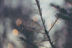 O galho do Natal com círculo do borrão ilumina o fundo Fotografia de Stock