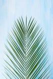 O galho verde de uma planta encontra-se em um fundo claro imagem de stock royalty free