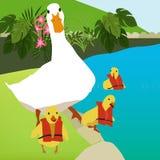 O ganso de mãe e seus pintainhos na natação classificam Foto de Stock Royalty Free