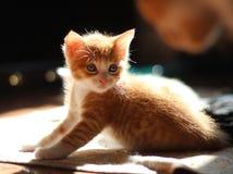 O gatinho é muito pequeno fotografia de stock royalty free
