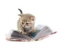 O gatinho Fotografia de Stock Royalty Free