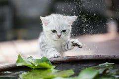O gatinho agita a água fora de seu pé fotografia de stock royalty free