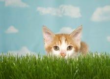 O gatinho alaranjado agachou-se na grama pronta para atacar no visor Fotos de Stock Royalty Free