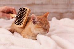 O gatinho aprecia escovar o encontro em uma cobertura macia fotos de stock