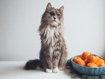 O gatinho bonito senta-se em uma tabela perto dos ramos do abeto fotografia de stock royalty free