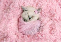 O gatinho britânico recém-nascido dorme na pele cor-de-rosa imagens de stock