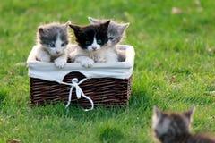 O gatinho chama seus amigos que se estão sentando em uma cesta de vime Imagens de Stock Royalty Free