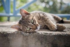 O gatinho cinzento está descansando no assoalho concreto Fotos de Stock