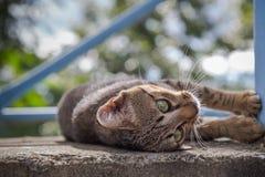 O gatinho cinzento está descansando no assoalho concreto Foto de Stock