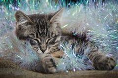 O gatinho cinzento pequeno bonito está dormindo Imagens de Stock