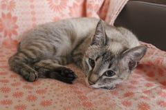 O gatinho doce listrado cinzento fotografia de stock