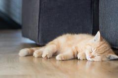 O gatinho doente obtém a gripe e o sono do gato Imagem de Stock Royalty Free