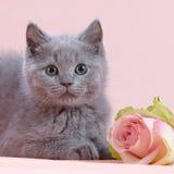 O gatinho e a cor-de-rosa levantaram-se fotografia de stock