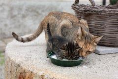 O gatinho e sua mamã Fotografia de Stock