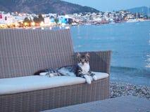 O gatinho encontra-se no sofá em um café pelo mar Fotos de Stock Royalty Free