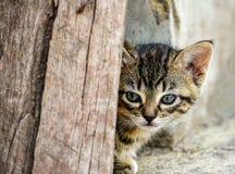 O gatinho espreita sua cabeça atrás de uma placa imagem de stock