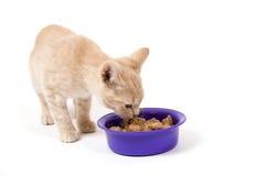 O gatinho está comendo imagem de stock