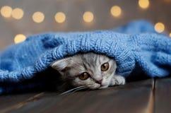 O gatinho está descansando em uma cobertura Foto de Stock