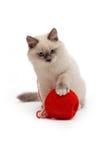 O gatinho joga com uma bola da linha vermelha Fotos de Stock Royalty Free