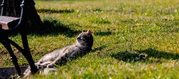 O gatinho listrado bonito encontra-se na grama verde no parque, é-se de apreciação e de aquecimento nos raios brilhantes do sol d fotografia de stock royalty free