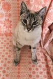 O gatinho listrado cinzento assentado fotos de stock