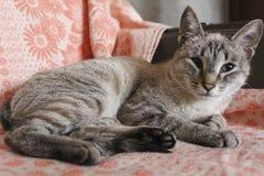 O gatinho listrado cinzento no sofá fotografia de stock