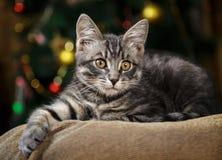 O gatinho listrado pequeno bonito encontra-se em um fundo festivo Foto de Stock Royalty Free