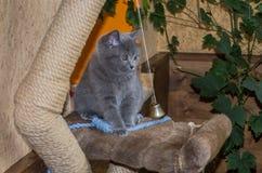 O gatinho macio pequeno é jogado na prateleira Fotografia de Stock Royalty Free