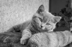 O gatinho macio pequeno é jogado na prateleira Foto de Stock