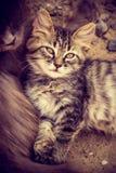 O gatinho macio pequeno encontra-se com mamã Gatinho e gato bonitos Imagem de Stock