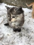 O gatinho o mais bonito no mundo fotografia de stock
