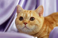 O gatinho olha acima Fotografia de Stock