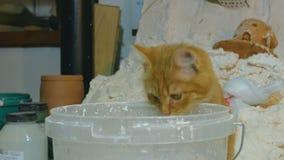 O gatinho olha na cubeta da pintura filme