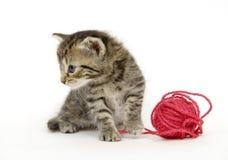 O gatinho olha para tomar o partido da esfera vermelha do fio no fundo branco imagens de stock royalty free