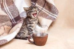 O gatinho pequeno acordou e bocejos Uma xícara de café na frente de fotos de stock royalty free