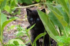 O gatinho pequeno aprende o mundo que anda nos arbustos da grama Foto de Stock Royalty Free